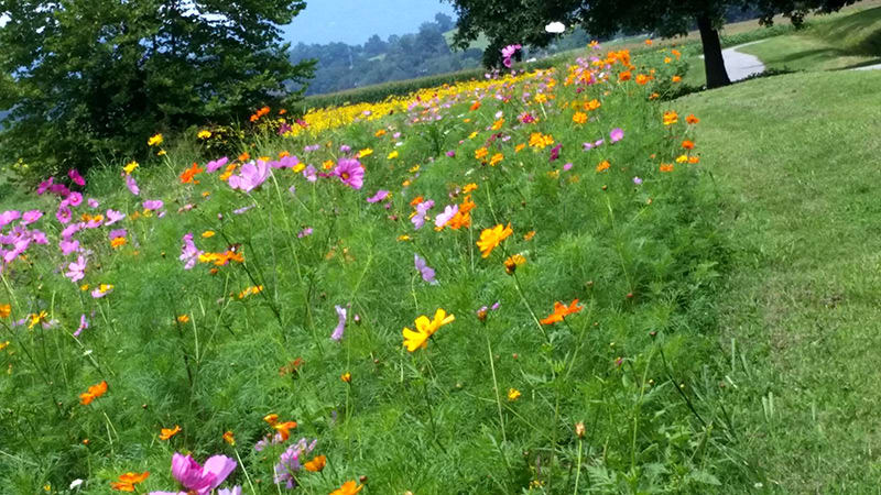 Wildflowers at Biltmore