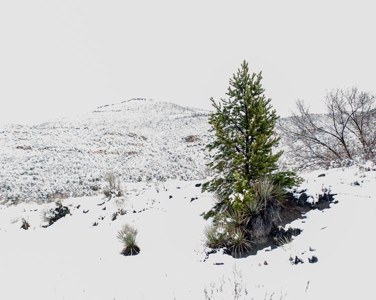 Winter Festivities in Raton